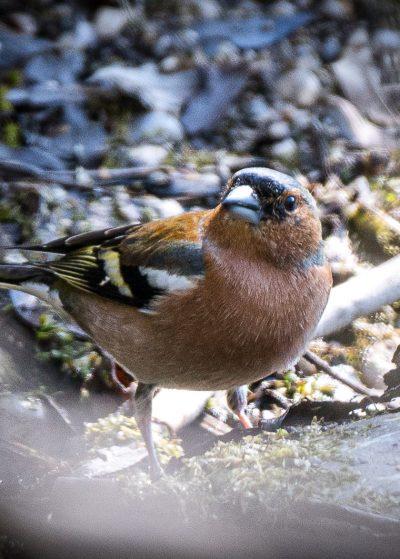 Vogel (1 von 1)-2